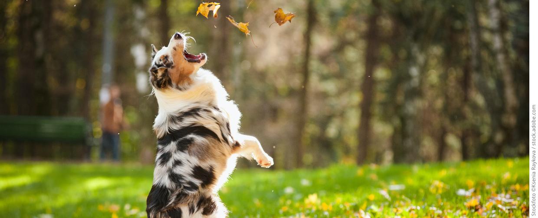medvet startseite hund 1240x504 copyright