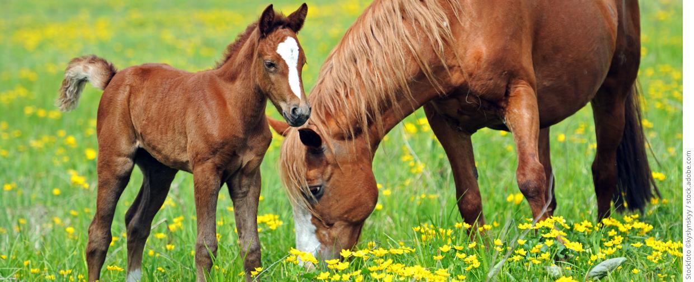 medvet startseite pferde 1240x504 copyright